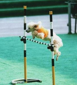 怎么让狗狗跳高?训练狗狗跳高的方法
